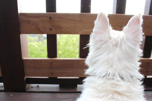 愛犬を土葬にする際の方法と注意点。