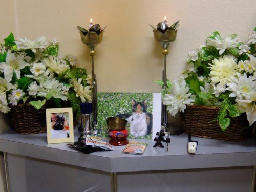 愛犬の葬儀・火葬はお寺で出来るの?
