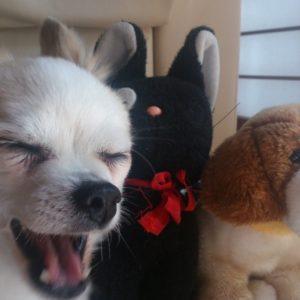 「えっ?本物の犬!?」と間違えるほどリアルに眠るぬいぐるみ