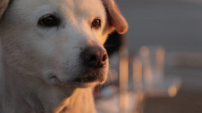 「ポチたま」まさはる君の先輩犬を超えた日と長生きを願う思い