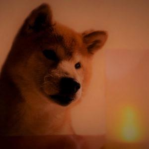 愛犬の火葬方法の種類と費用はどれくらい?