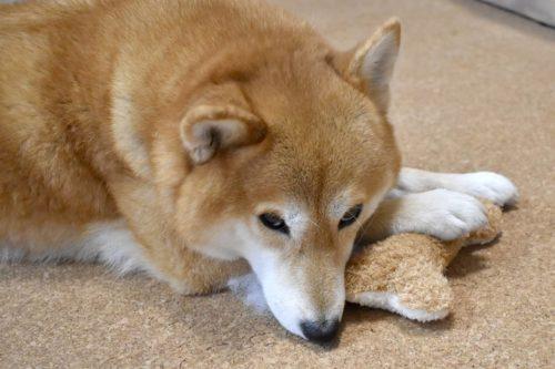愛犬の遺骨にカビが・・・今日から始めるカビ対策とは?