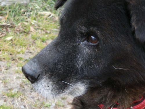 愛犬の代表的な老いのサイン、10項目とは?