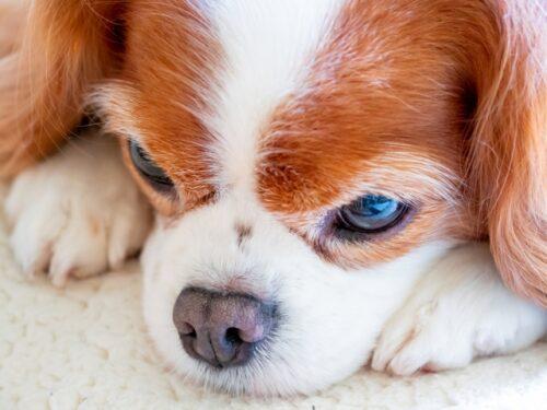 愛犬の葬儀・火葬で実際にあったトラブルとは?回避するには?